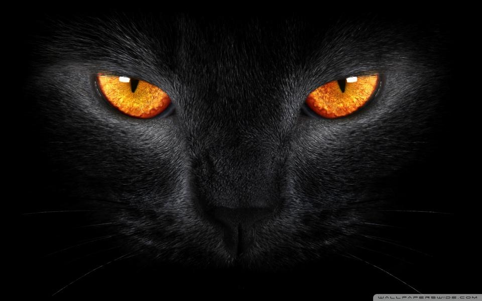 black_cat_5-wallpaper-960x600